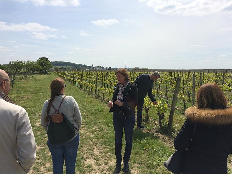 Wine Tourisme at Domaine de Nerleux : visit, escape game and wines