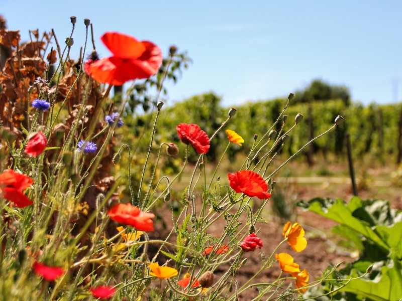 Engagement environnemental vins saumur